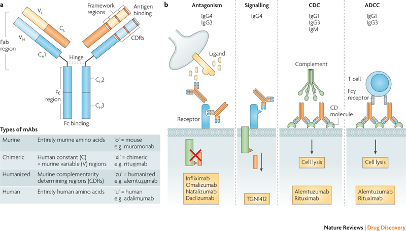 developing glycosylated therapeutic antibodies The role of glycosylation in therapeutic antibodies  specific antigen binding  was advanced through the development of techniques for.