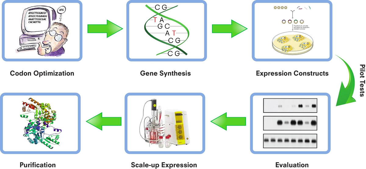 Protein Services | Protein Purification Services